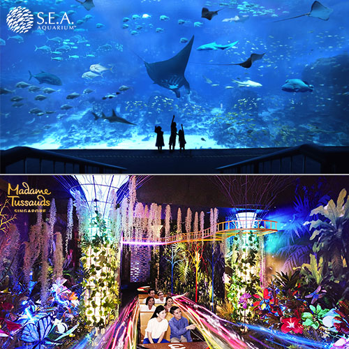 S.E.A Aquarium + Madame Tussauds [Adult]