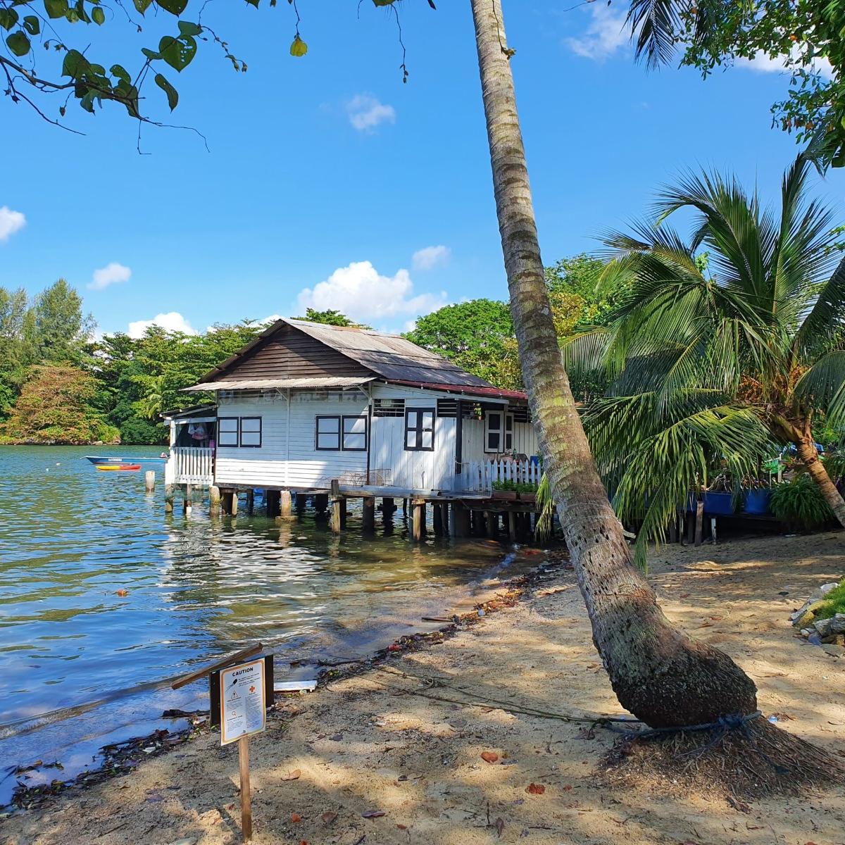 Explore Chek Jawa @ Pulau Ubin