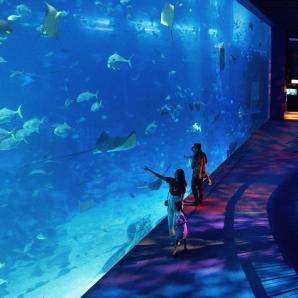 SEA Aquarium + Lunch + Floral Fantasy Full Day Tour
