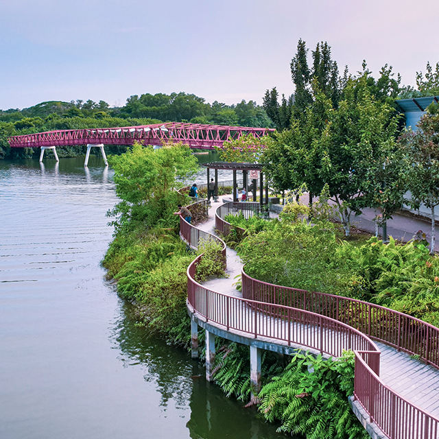 Ride the Sustainability Wave: A half-day cycling tour of Punggol Waterway and Lorong Halus Wetlands